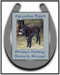 Horseshoe Ranch Miniature Donkeys - Logo designed by Dayle