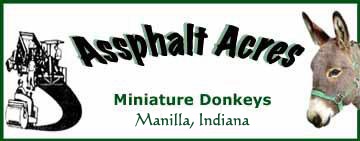Assphalt Acres Miniature Donkeys